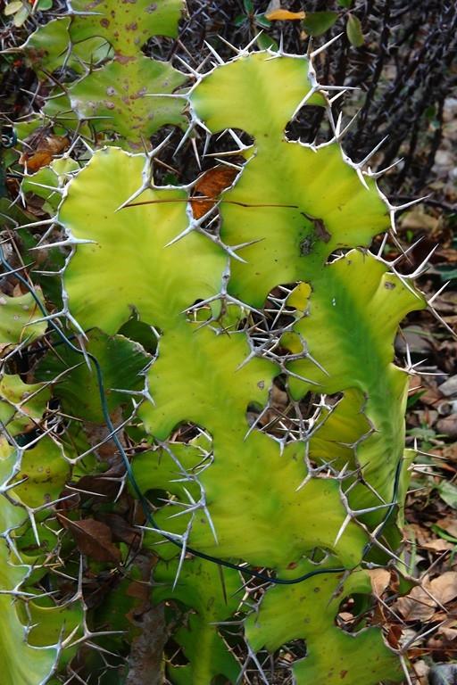 Mars 2016 - Plantes exotiques
